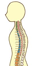脊椎のイメージイラスト